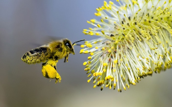 Come chiedere l'ape sociale